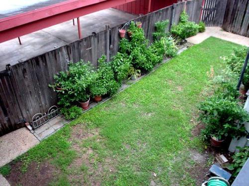 3659 Backyard